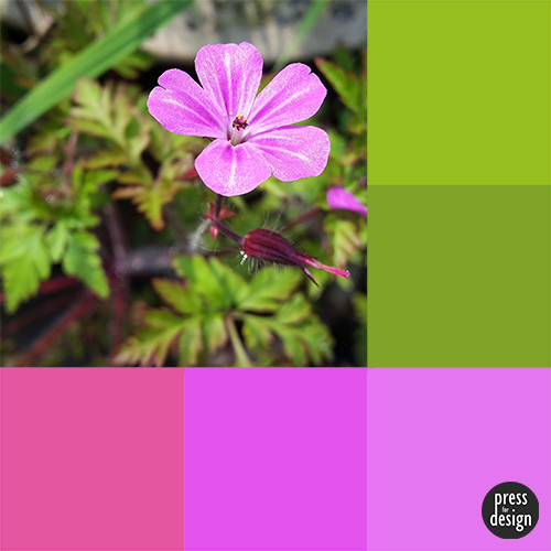 Tuesday Colour Inspiration: Geranium