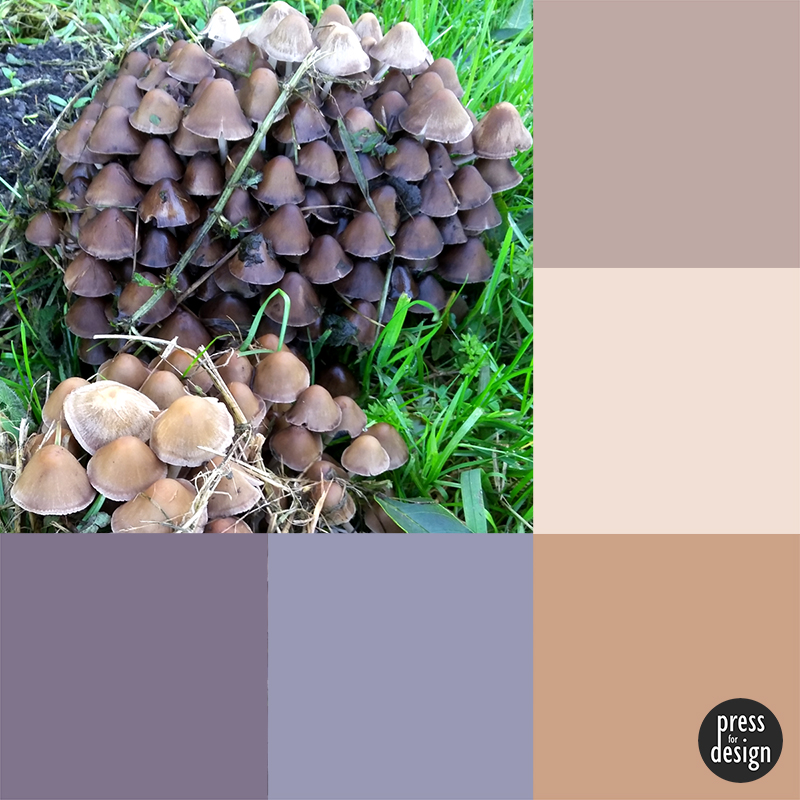 Tuesday Colour Inspiration: Host of Mushrooms
