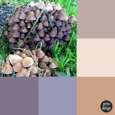 host of mushrooms colour inspiration swatch