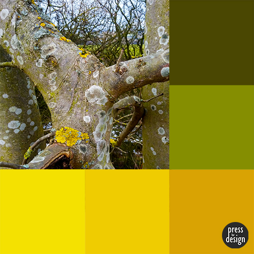 Tuesday Colour Inspiration: Lichen