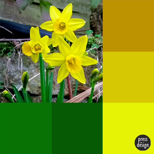 Tuesday Colour Inspiration: Mini Daffs
