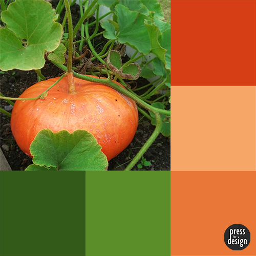 Tuesday Colour Inspiration: Home Grown Pumpkin