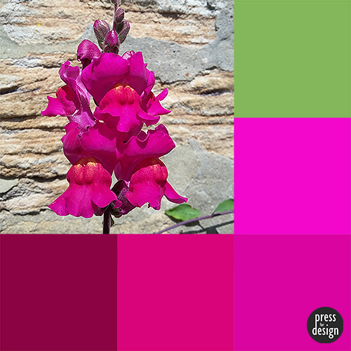 Tuesday Colour Inspiration: Snapdragon