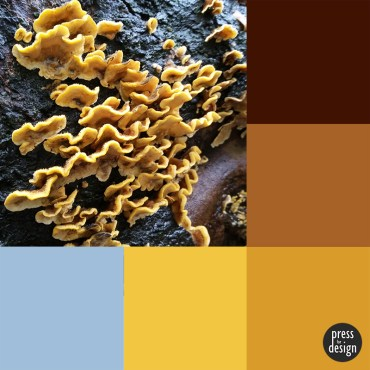 Tuesday Colour Inspiration: Tree Funghi