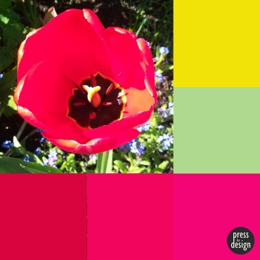 Tuesday Colour Inspiration: Tulip