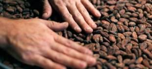 Hayatlarında ilk defa çikolatayı tattılar