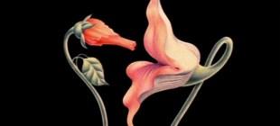 Kadın cinsel organı hakkında bilmediğiniz 10 şey
