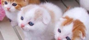 8 Maddeyle Huyuna göre hayvanların sevilme yerleri