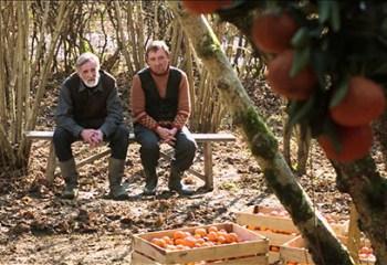 Düşük bütçeli ama kocaman kalpli bir film: Mandalina Bahçesi