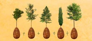 Öldükten sonra ağaç olarak dirilmek için Capsula Mundi