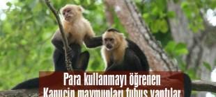Kapuçin maymunları, para kullanmayı öğrenince fuhuş yaptı