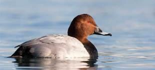 19 kurumdan nesli tehlike altında olan kuşlar için ortak çağrı: Kuşlar yaşasın!