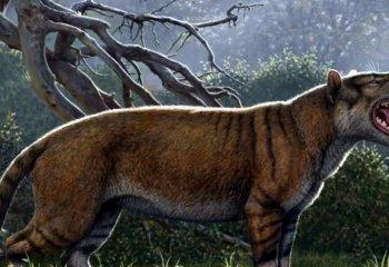 Afrika'nın en büyük aslanı 'Simbakubwa' keşfedildi