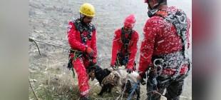 Dağ yamacında mahsur kalan keçi kurtarıldı