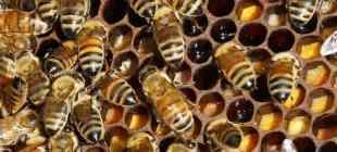 BM raporu: 1 milyondan fazla bitki ve hayvan türü yok olma tehlikesiyle karşı karşıya