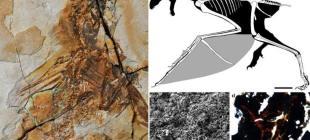 Yarasakanatlıyeni bir dinozor türü keşfedildi