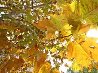 Giornata alberi, parchi assorbono 145 mln t di CO2 all'anno