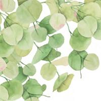Eucalyptus Theme
