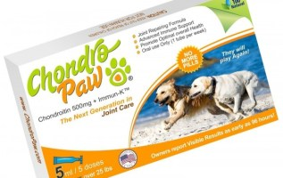 Why ChondroPaw Joint Health for Dogs is Superior to Other Supplements 2