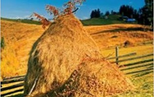 Like a Haystack: Life from My Perspective, a Memoir by Margaret Smolik's Family Incredible Emigration from Croatia to America during WW2 2