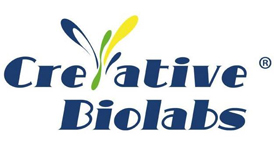 Creative Biolabs Expert in Target or MOA Based Bispecific Antibody Design Service 4