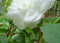 Croissance et réduction dans un jardin intérieur