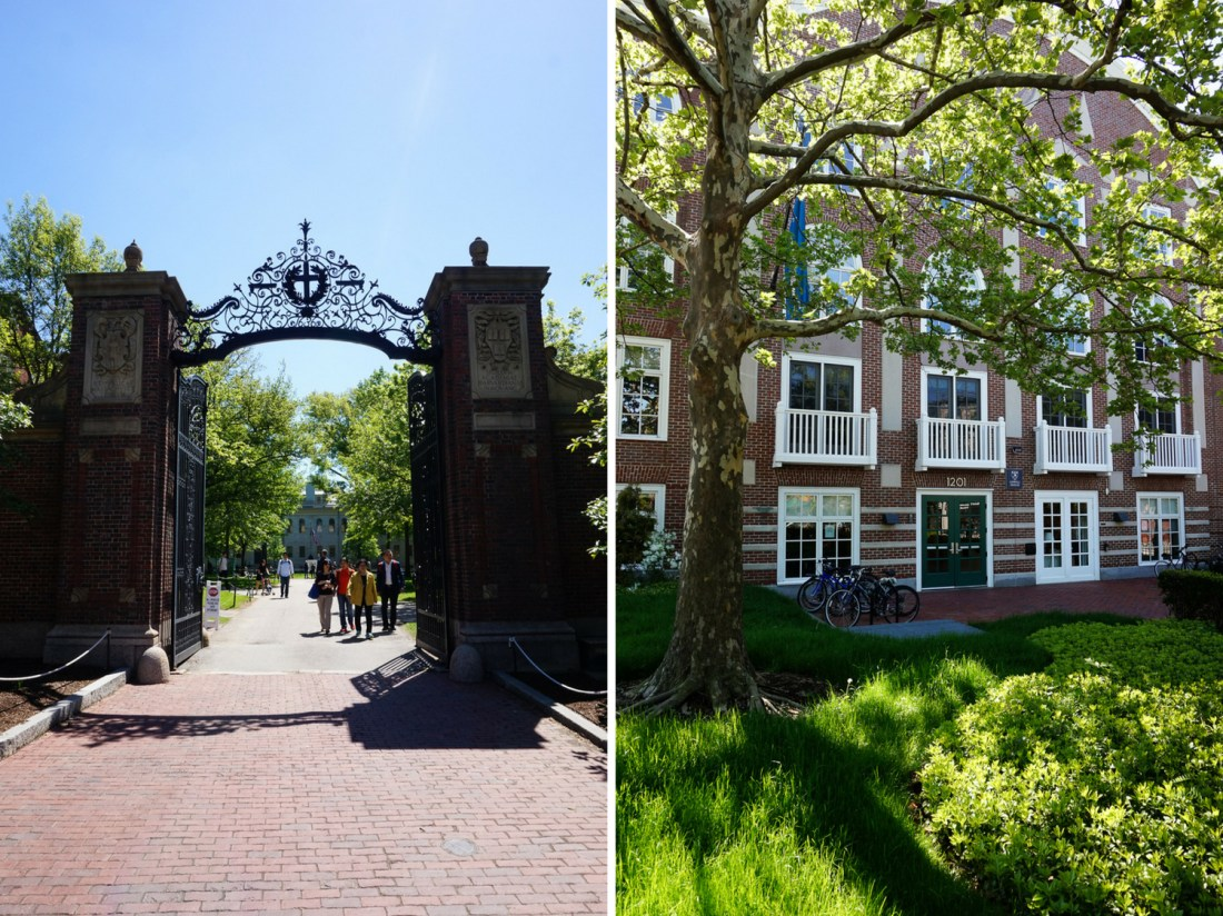 pretty naive | Cambridge (Harvard University)