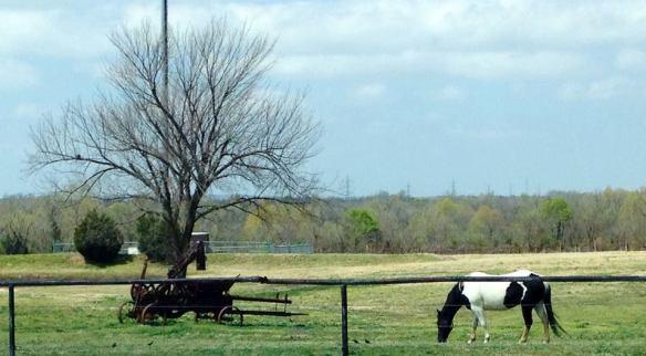 PAWS-Owasso, Oklahoma