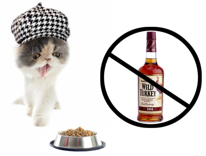 Cat in hat and say no to whiskey drunken kitty