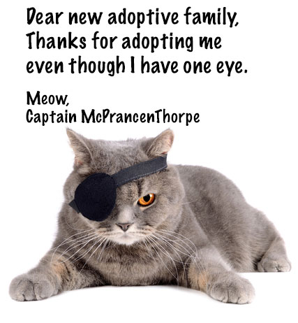 One eyed cat happy with adoptive family and his eye patch