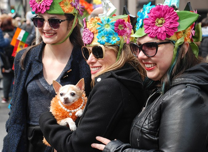 Couture dog at the NYC Easter Day Hat Bonnet Parade 2016