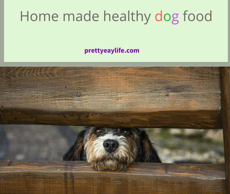 Home made dog food – healthier & cheaper!