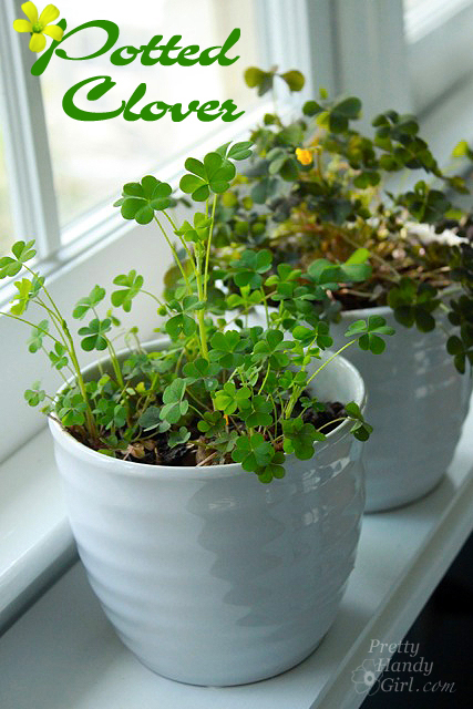 Potted Clover | St. Patrick's Day Party Ideas for DIYers
