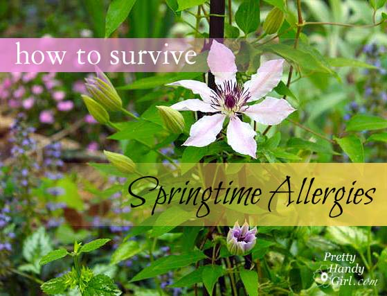 how_to_survive_springtime_allergies