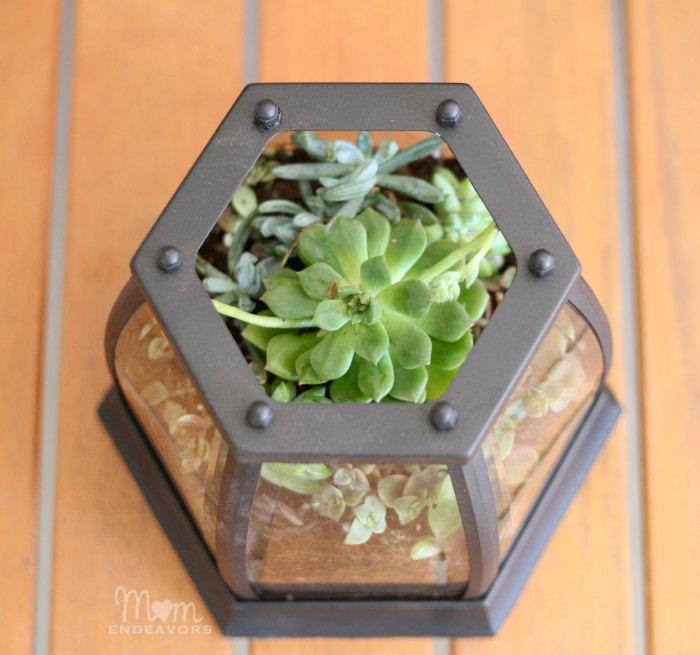 DIY Succulent Garden