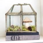 25 Ideas for Tabletop Gardens and Terrariums