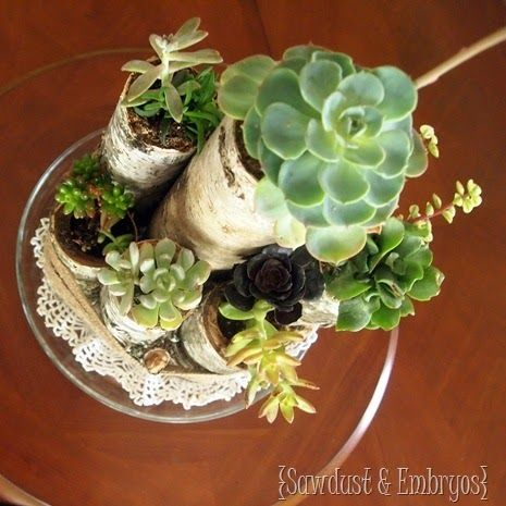 Succulents & Birch Log Centerpiece