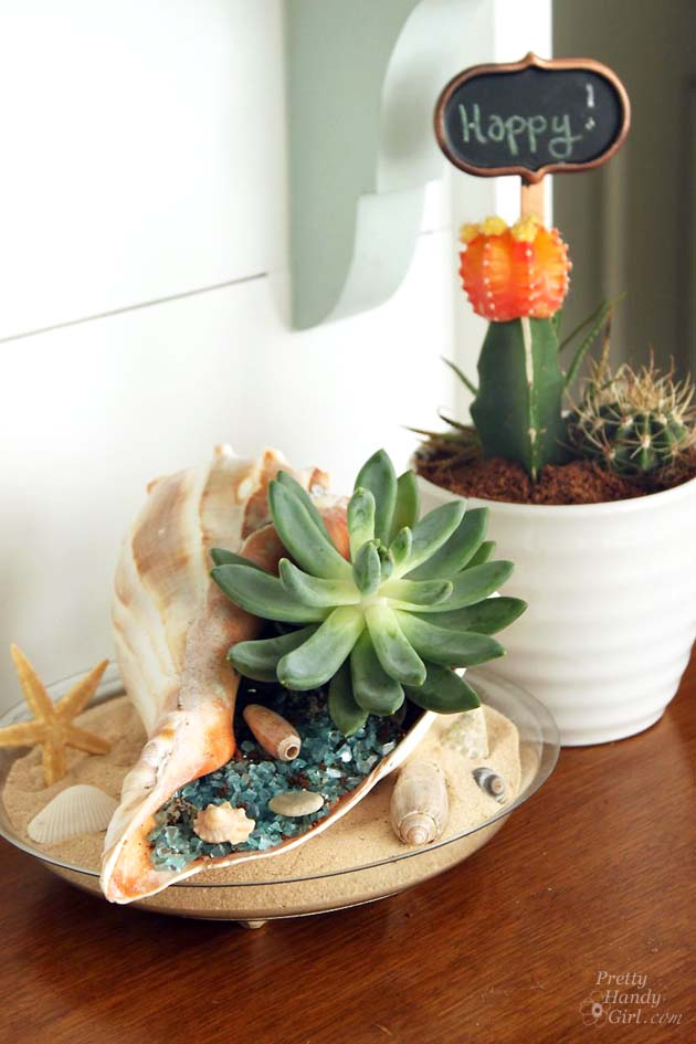 Beach-themed Succulent Garden | Pretty Handy Girl