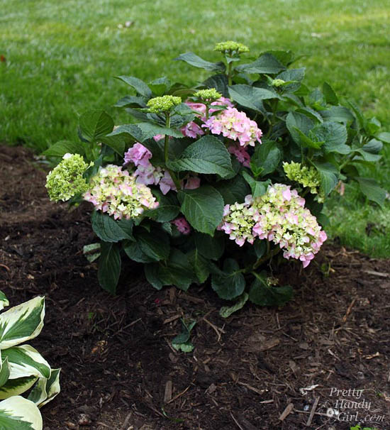 Easy Color in Your Landscaping Beds | Pretty Handy Girl