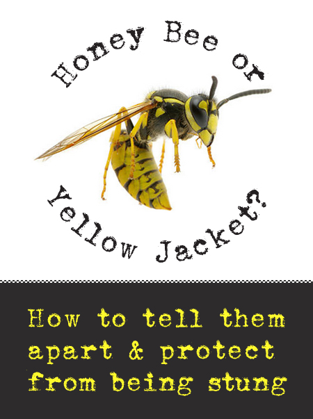 Honeybee vs. Yellow Jacket | Pretty Handy Girl