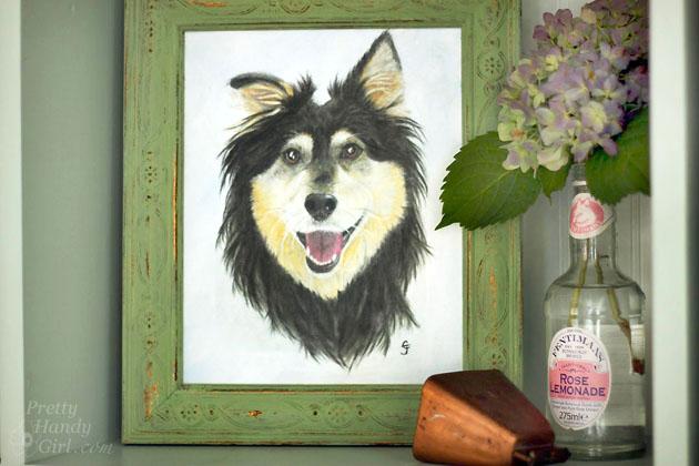 Buddy Handy Dog | English Shepherd Portrait