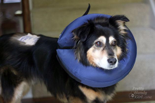 Buddy Handy Dog | Pretty Handy Girl