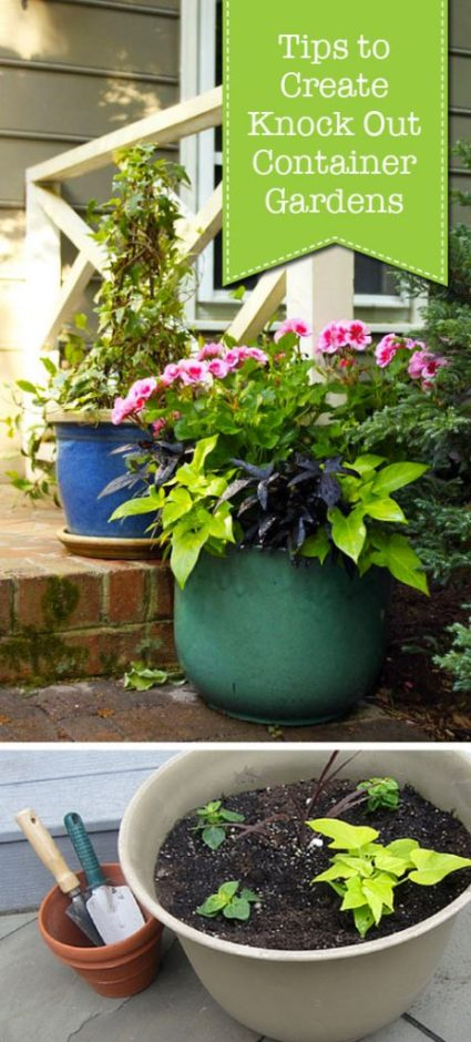 Tips to Create Knock Out Container Gardens   Pretty Handy Girl
