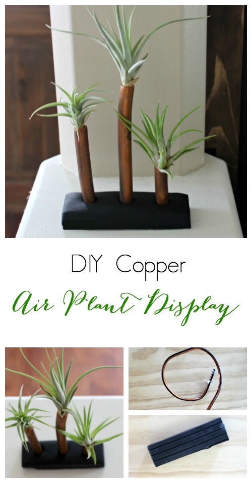 Pretty Handy Girl | Air Plant Display