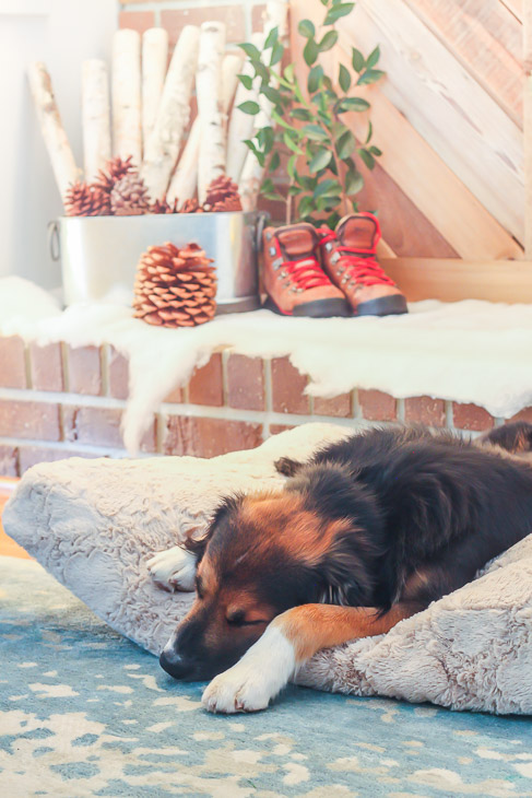 sleeping-dog-athome-dog-bed