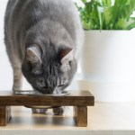 DIY Wooden Raised Pet Feeder