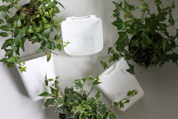 ivy plants and Ikea plastic bins