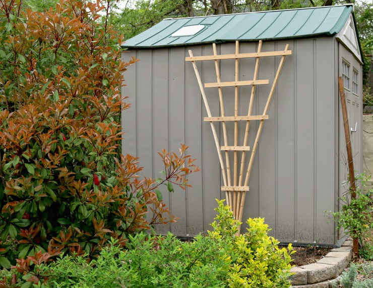 Fan trellis against shed