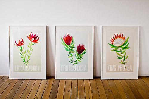 Proteaflora by Lara Cameron