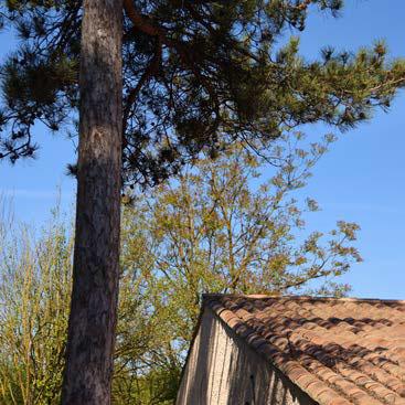 Debroussaillement arbres et branches